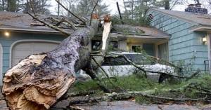 tree-on-house-470x246